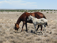 (Thumbnail of two horses in a field)