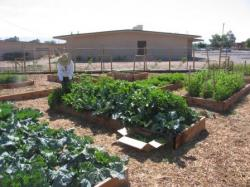 BernCo Garden with raised beds and building in backgroud