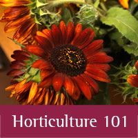 Horticulture 101 at Los Alamos county