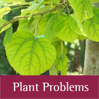 Plant Problems at Los Alamos county