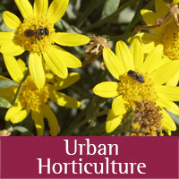 Urban Horticulture programs at Eddy county
