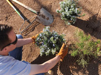 Yard and Garden programs at New Mexico State University, Cooperative Extension Service